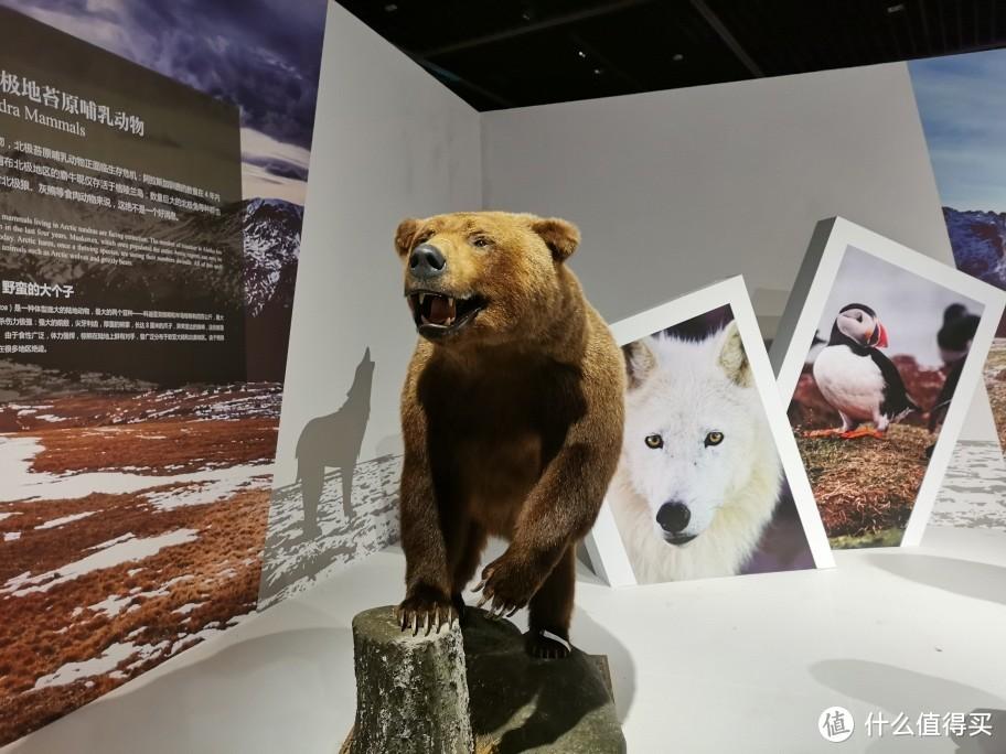 棕熊,比上上上图那只小不少