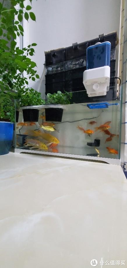 买了一些闯缸鱼