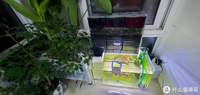 运行几个月之后的过滤系统,停水植物已经长的很高了