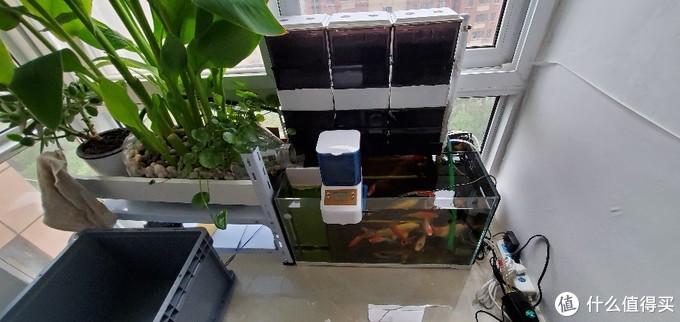 滴滤+沼泽过滤+反气举,一个99块钱的鱼缸所引发的过滤系统的不断升级