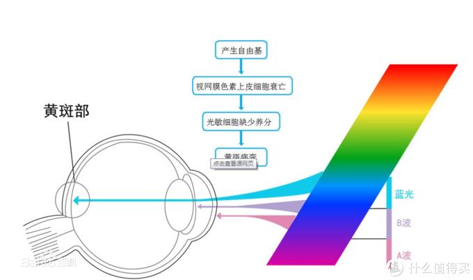 蓝光是如何影响我们的视力