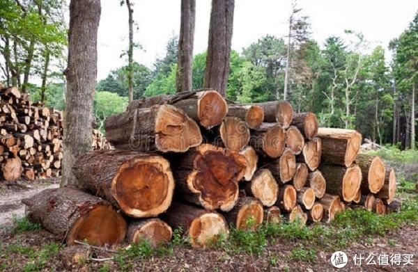 实木的松木床,到底值不值得买?