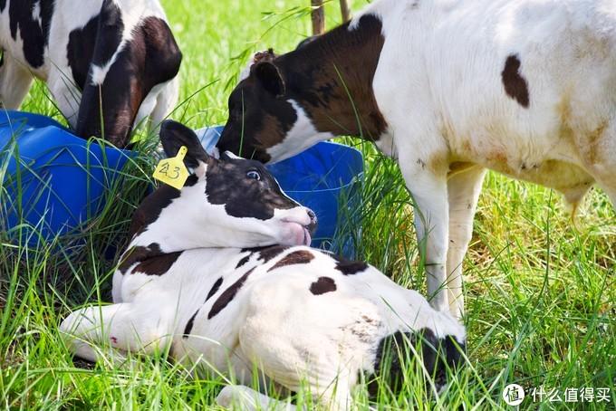探究原奶产地,追溯制作细节——伊利敕勒川牧场亲子之旅