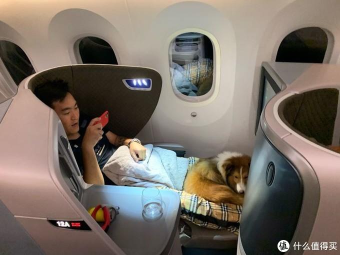 疫情前带狗狗钱多多坐飞机上客舱坐头等舱游东南亚