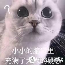 好看的猫都是别人家的,普通猫就佛系着养吧