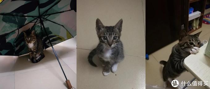 新手养猫指南,吃、喝、拉、撒全掌握。精心伺候猫主子