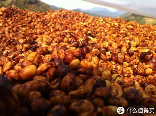 精品咖啡豆子选哪些?这十款豆子睁眼下单即可享受