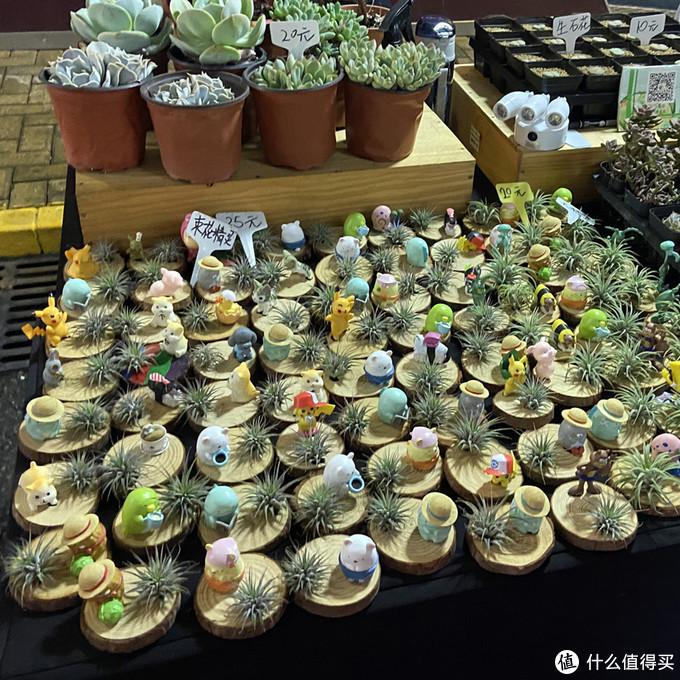 金桥国际夜市——小盆栽