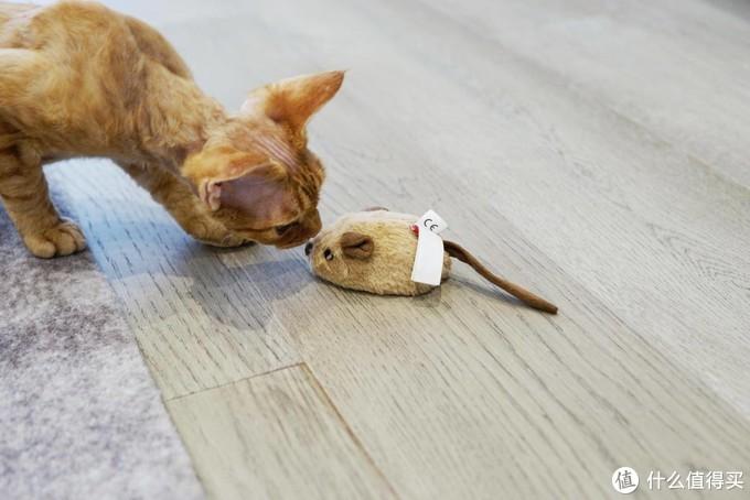 新手养猫需要买点什么?