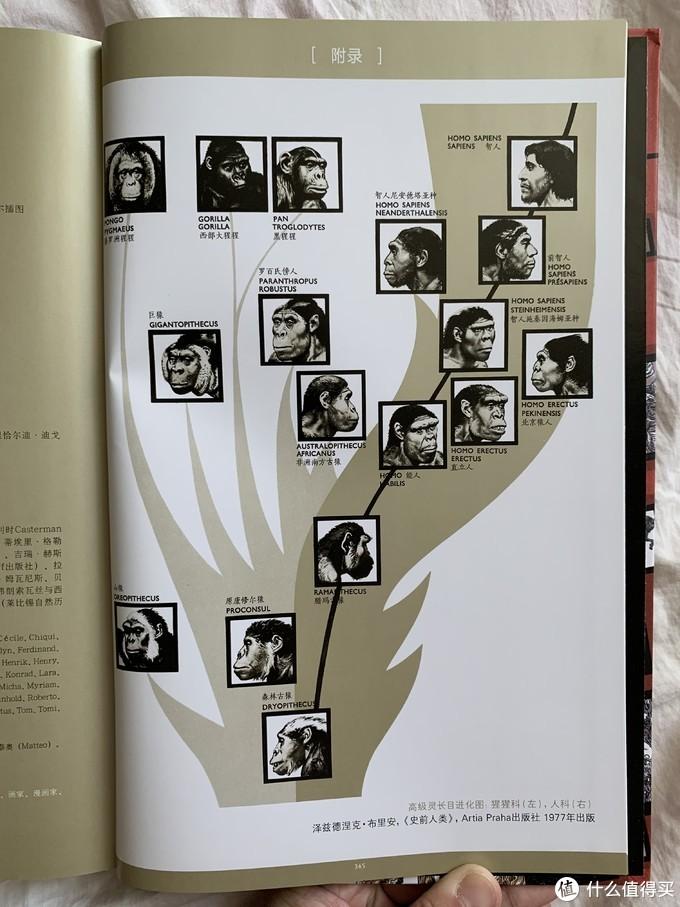 图书馆猿の2020读书计划43:《万物:文明-从人类诞生到古罗马》