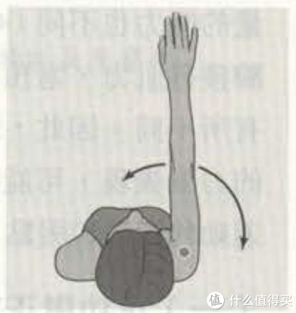 肩关节水平屈(图里朝左)和伸(图里朝右)