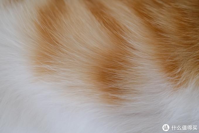 一只橘猫的成长史,以及我是如何捉到一只野生橘猫?