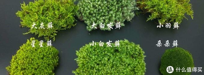 养花秘籍:VOL.10|保姆级植物生态缸DIY教程,教你把热带雨林搬回家!