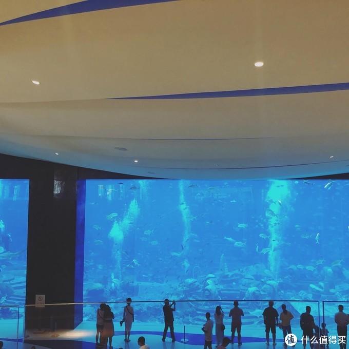 大堂右手边就是这个吸引人的海底世界