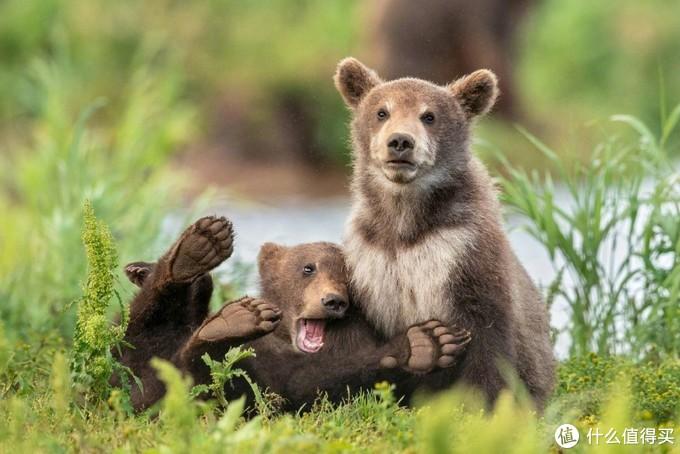 2020年《野生动物搞笑摄影大赛》决赛入围作品公布,野生动物都是演艺大师,简直是一部喜剧大片