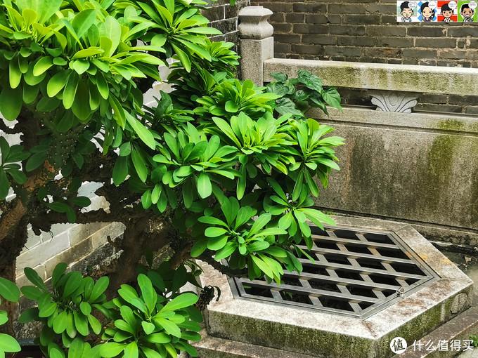 窄窄的巷子里,有不少玲珑藏于方寸之间。
