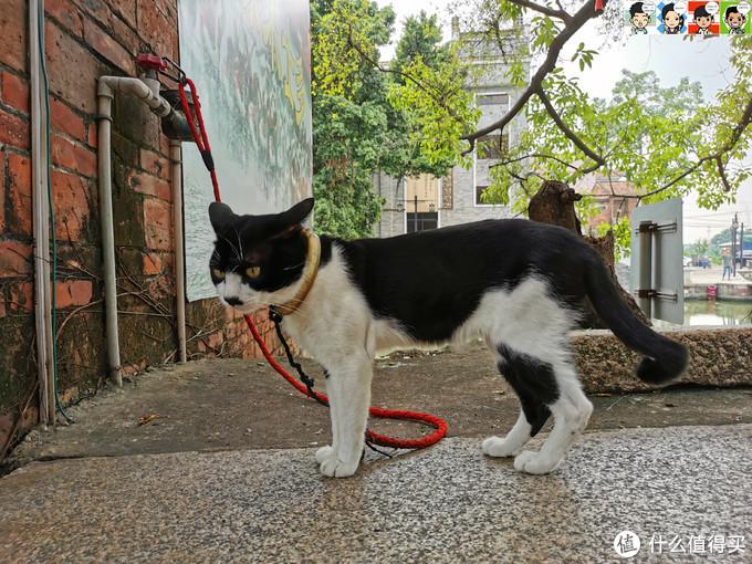 偶遇黑白猫一只
