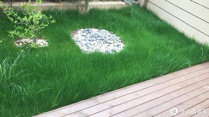 春天草皮的情景