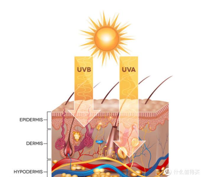 UVA、UVB照射对皮肤的影响(图片引自网络)