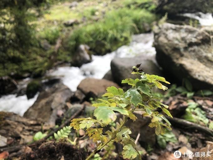 雪山水融化的溪流