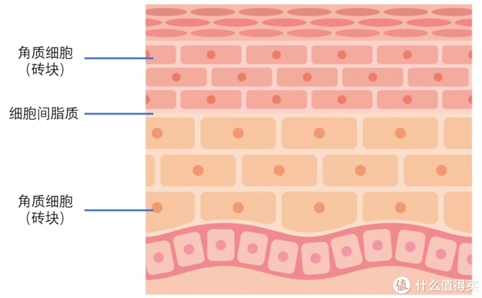 皮肤砖墙结构示意图(图片引自网络后再制作)