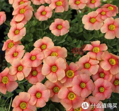 给生活加点情调,可以试试这10款花期长、常开花、易养活的植物