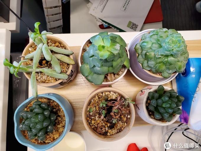养花秘籍VOL.11:办公室绿植养啥死啥?试试这8个均价不超20元的小盆栽!