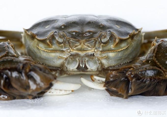 买大闸蟹,拿上这份挑蟹宝典就够了!