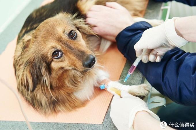 想要养狗?你的钱包准备好了吗?聊聊养狗的每年要花多少钱!