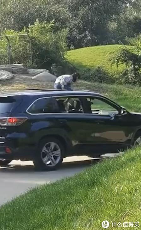 野生动物园内女孩坐在车顶观光,园方回应来了!