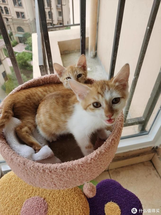 新手养猫必备的32件好物, 你准备了吗?