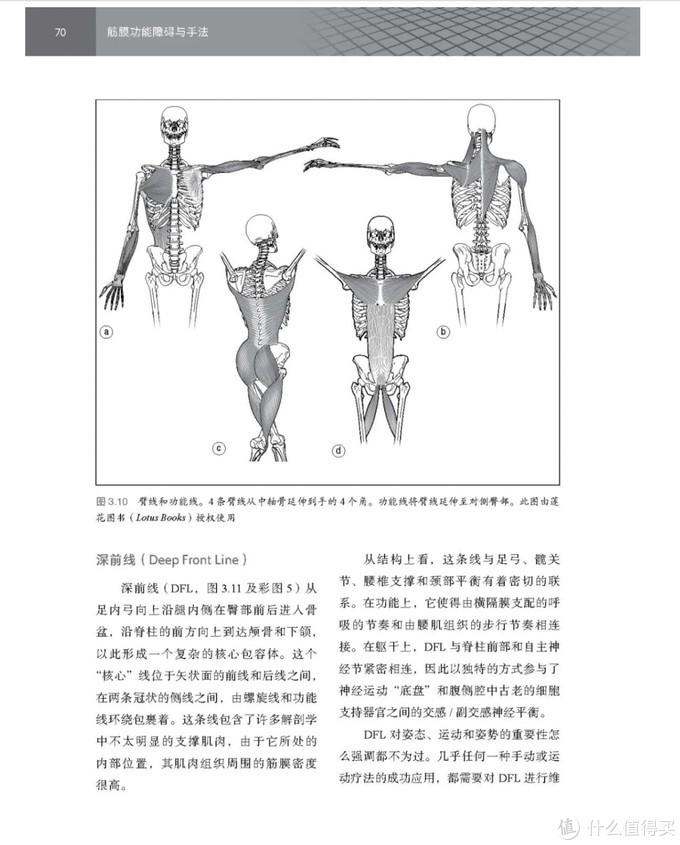 筋膜枪都听说过,但筋膜是什么?有什么功能?