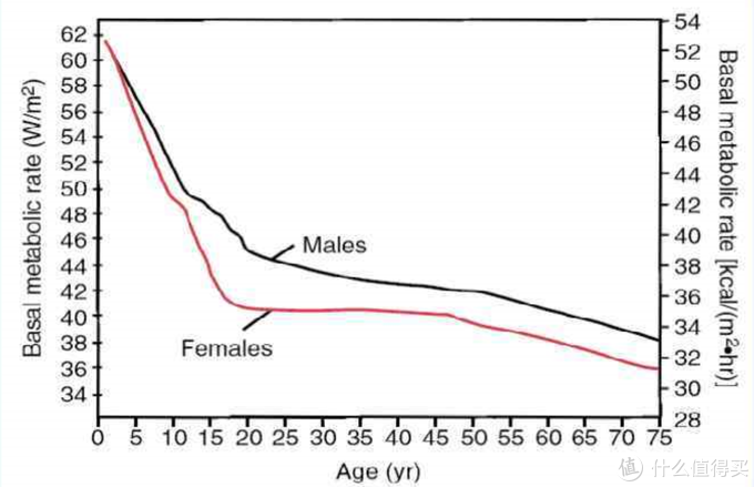 The basal metabolic rate in females and males decreasing with age.