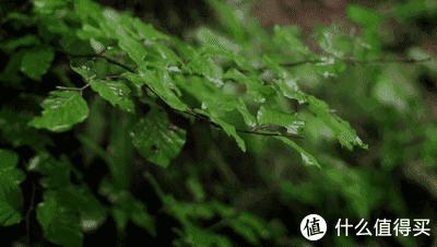 茶馆南方雨季