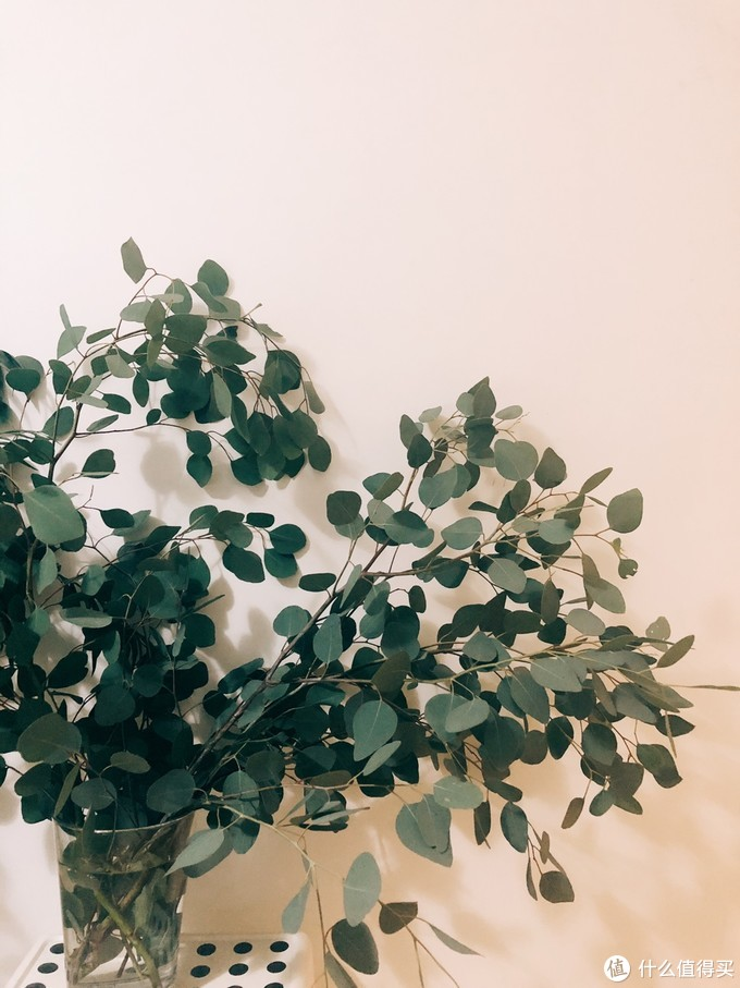 超平价的鲜切植物,自带仙气又高逼格!比起吊钟、马醉木,也丝毫不逊色~