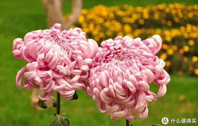 凉快的季节,一起去赏花