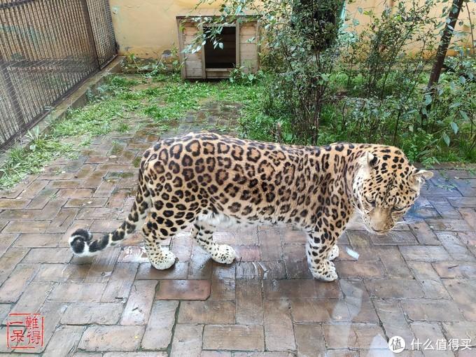 十一不宅家,出门去撸猫……啊……不,是撸大猫!!!(上)