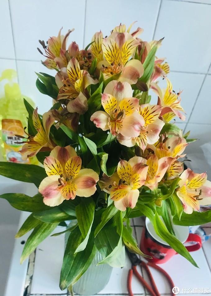 【我可以赚钱养家,也可以省钱买花 】9.9包邮买束鲜花,新用户还送花瓶