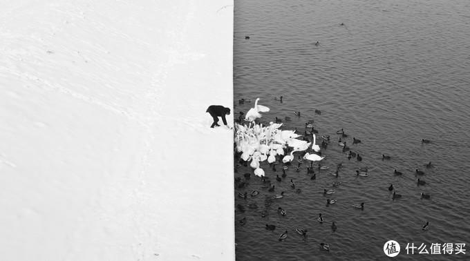 大师构图——A man feeding swans in the snow By Marcin Ryczek