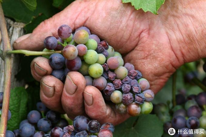 【深度】50块和5,000块的葡萄酒究竟有什么区别?