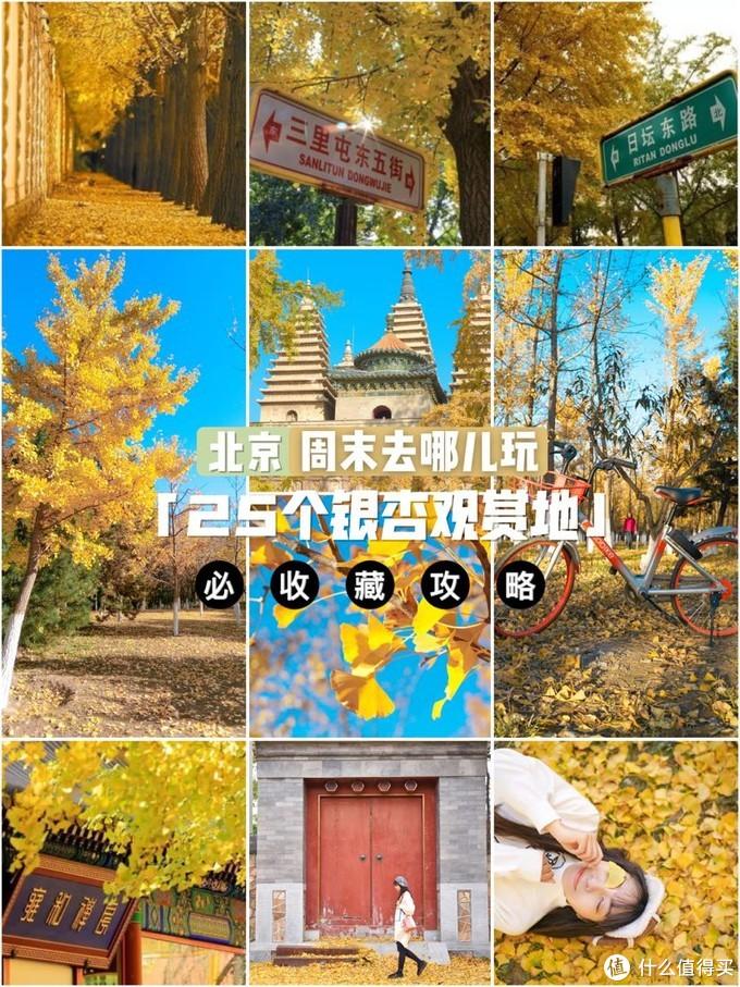 银杏季必收藏!25个北京银杏观赏地合集