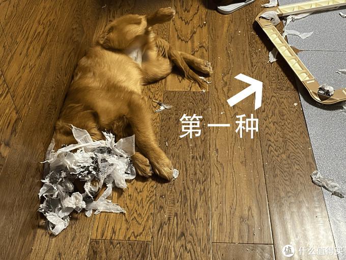 新手养狗入坑指南——小狗用品清单(内含41件产品推荐)