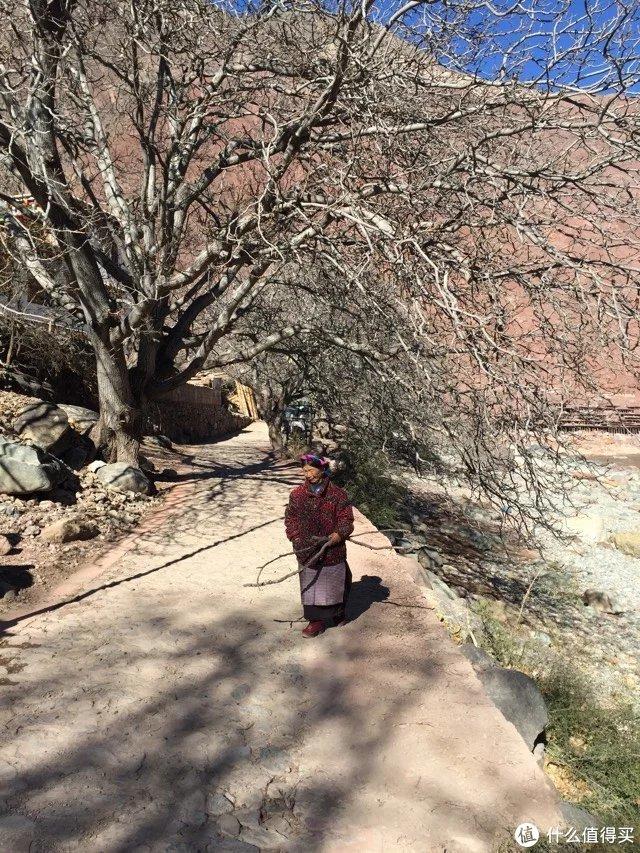 百年核桃树