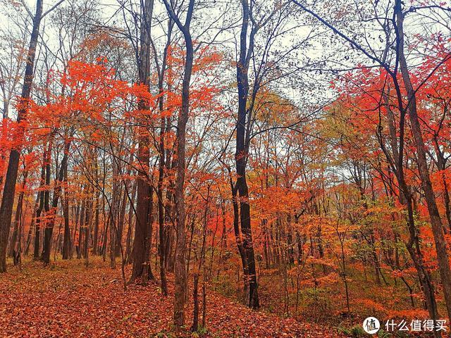 北国秋色,没有游客只有红叶,一座山脉连着一座山脉