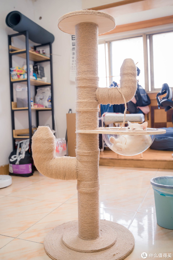DIY自制猫爬架 贫穷家庭200元采购PVC水管+麻绳