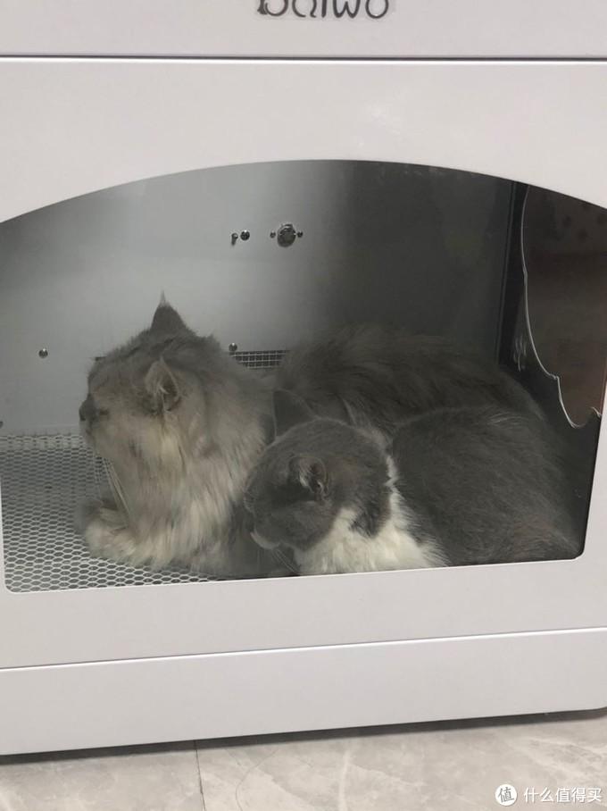 宠物烘干机