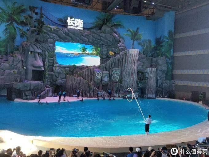 海豚表演(表演30分钟)