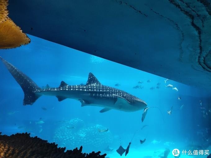 带娃看世界篇之珠海,入住长隆企鹅酒店和横琴湾酒店,打卡星奇塔无动力世界