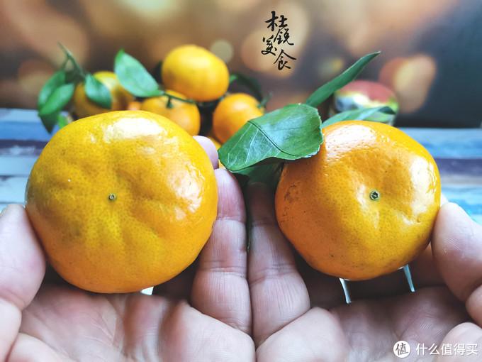 橘子分公母,可不能挑错了,掌握这6点,保准挑的橘子个个甜