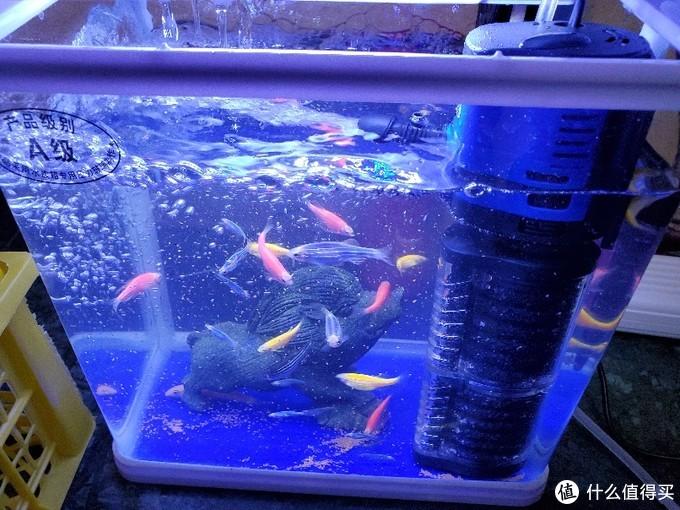 6块5的鱼缸氧气泵和17块5的森森氧气泵有什么区别?两台鱼缸氧气泵开箱